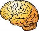 the-brain.jpg
